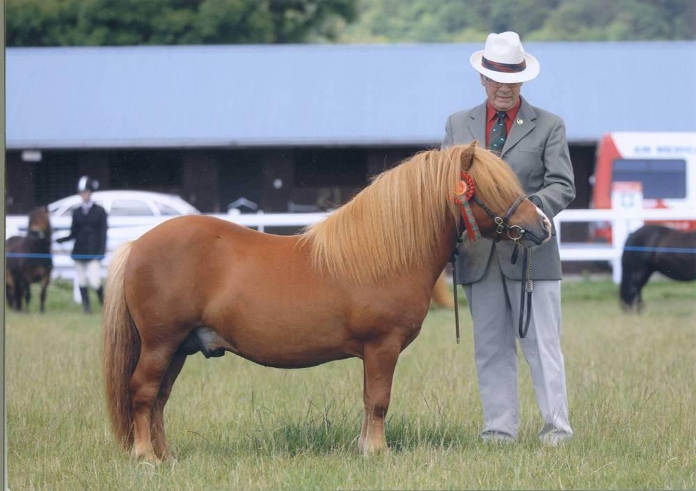 poney shetland poids